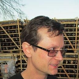 Алексей, 43 года, Мытищи