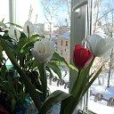 Цветы от наших дорогих мужчин на 8-е Марта из альбома «Мои фотографии»