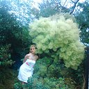 туманное дерево....туманные мысли....))))))