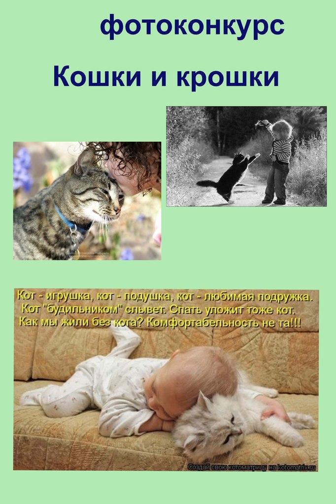 любовь конкурсы фотографий кошек ваш балкон мал