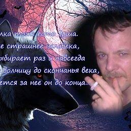 Фото Волк -Одиночка, Нижний Тагил - добавлено 23 июля 2014