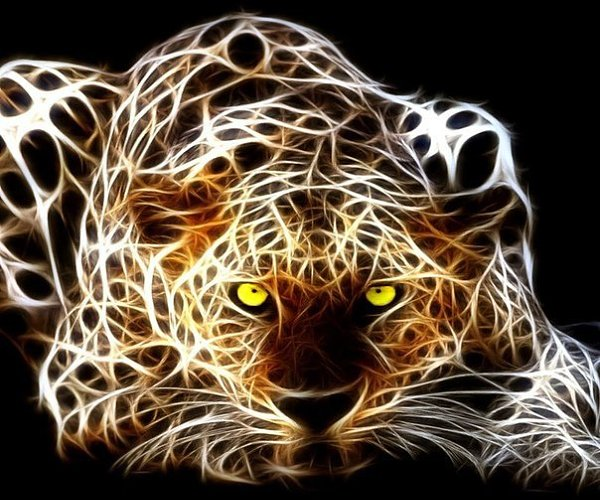 3d wallpapers hd animals - photo #7