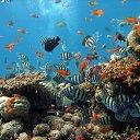 Фото Farida, Ижевск - добавлено 27 июля 2014 в альбом «подводный мир»