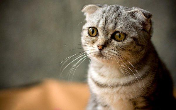 Картинки милые котята маме всем
