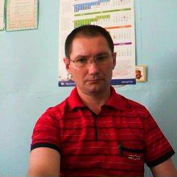 Александр, 44 года, Кошки