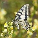 Фото Farida, Ижевск - добавлено 27 июля 2014 в альбом «мир насекомых»