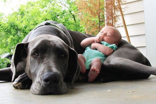 Подписывайтесь на нас: http://fotostrana.ru/public/233467 ;-) Маленькие дети и их большие друзья. - 8