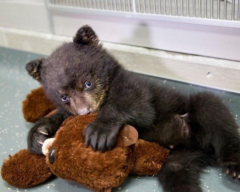 каталог смешные картинки с медведями которые спят ранняя