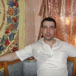 андрей, 46 лет, Сольцы