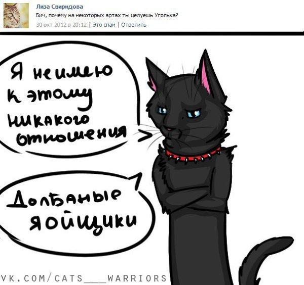 Коты воители бич приколы картинки
