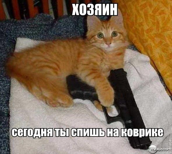 Без кота и жизнь не та - 17 июля 2015 в 18:59