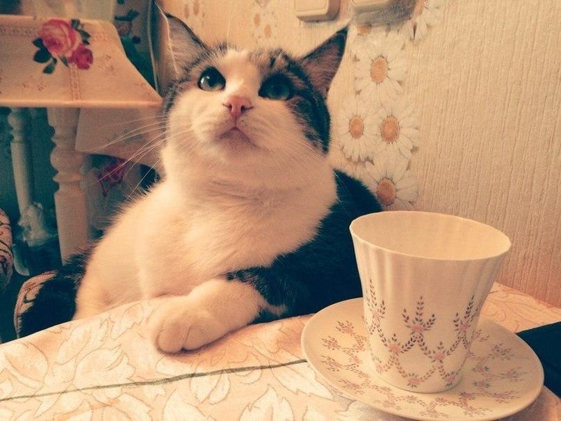 спайсов картинки с котами и чаем и мы не подкачаем избежать ответственности