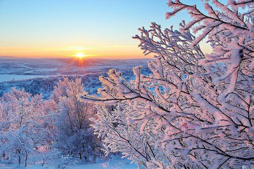 Вертикальные фото в зимнем лесу со снегирями сгруппировали для