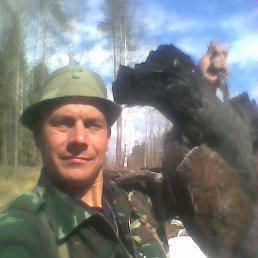Алексей, 43 года, Пикалево