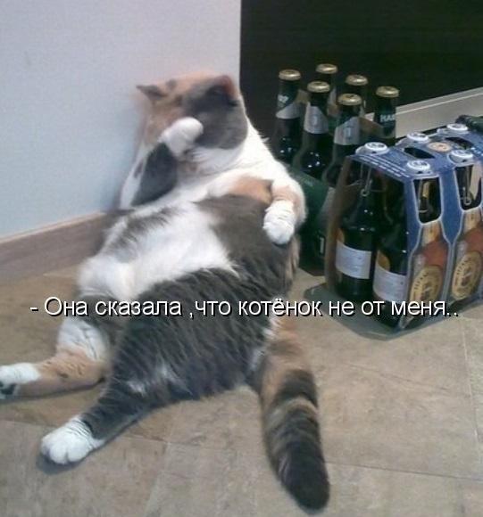 Без кота и жизнь не та - 26 ноября 2015 в 08:02