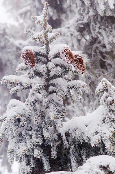 Живая природа - 23 декабря 2015 в 09:33 - 5