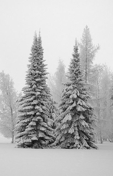 Живая природа - 23 декабря 2015 в 09:33 - 4