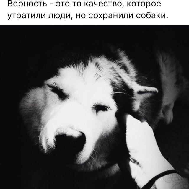 Открытки про верность собак, днем