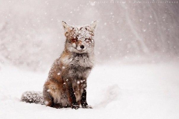 Пост обожания лис! Невозможная милота