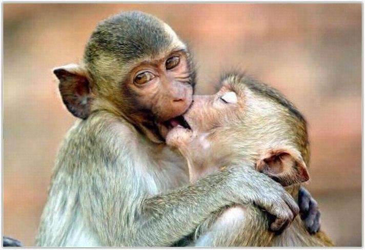 Смешные картинки целоваться