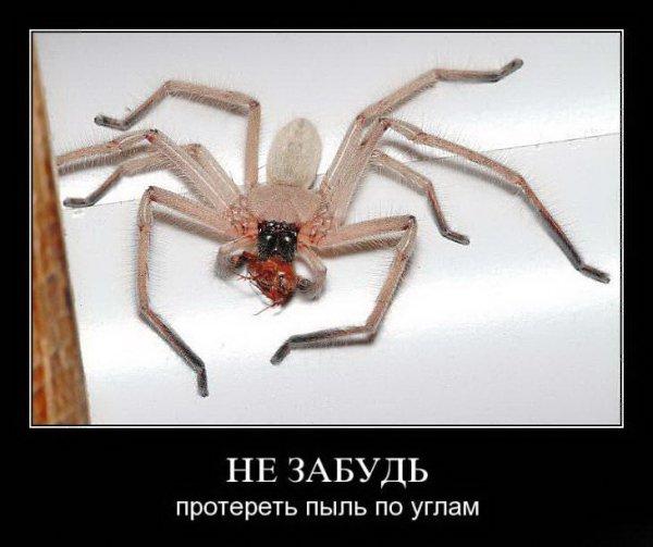 демотиваторы про паук активную