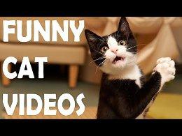 Приколы с котами и кошками - ТОПовая подборка от VideoZone