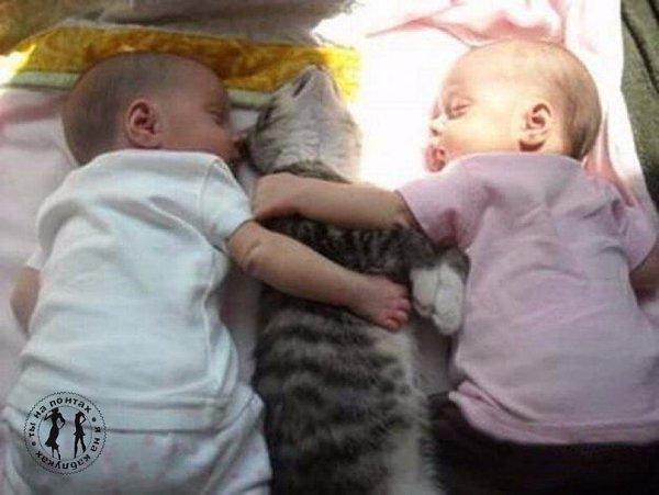 Главное - все довольны! Особенно - кот )))