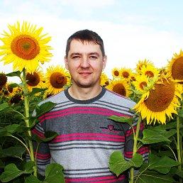 Василий, 37 лет, Курск