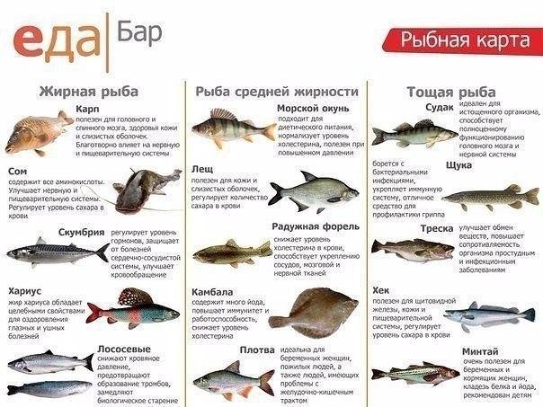 Ты все еще не любишь рыбу!? Прочти внимательно и сделай выводы!