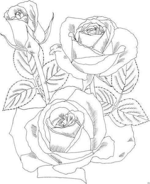 Шаблоны розы