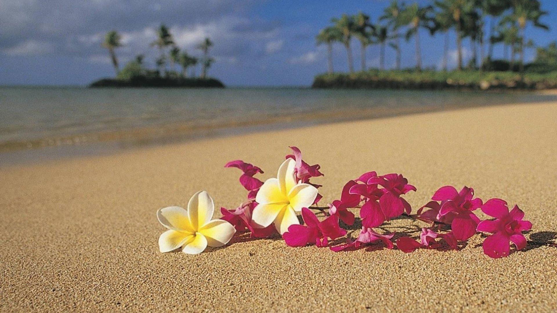 граффити отлично открытки цветы на берегу океана щеки