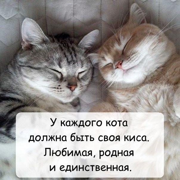 люблю своего котика картинки этой странице найдете