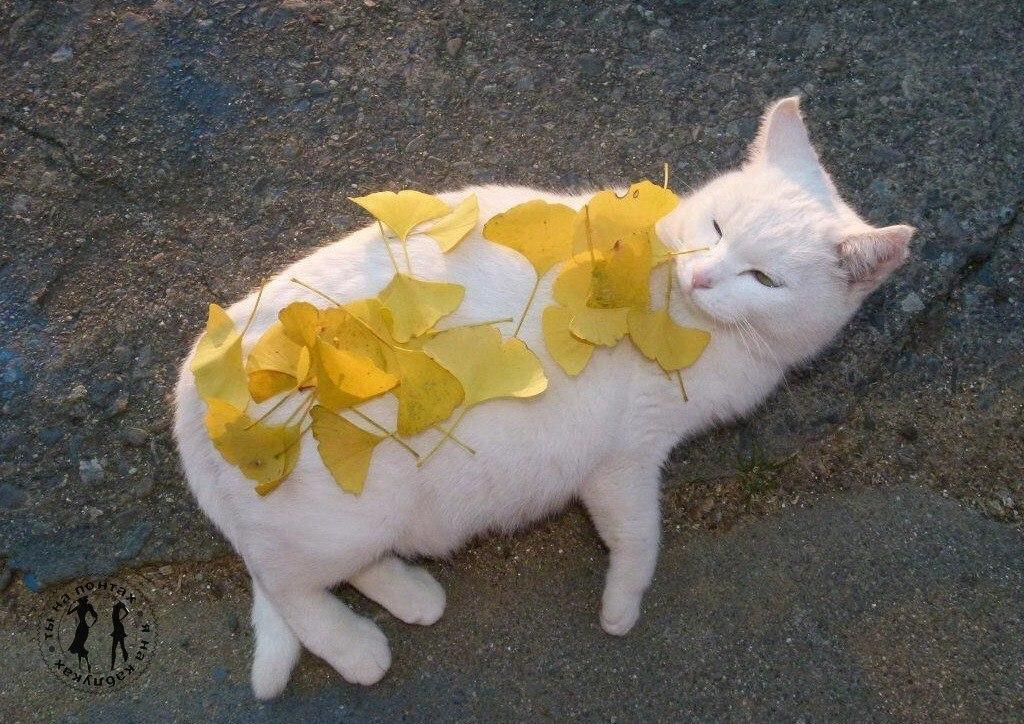 Сентябрь заканчивается... а у тебя ни одной фотографии с желтыми листьями на голове... Совсем ...