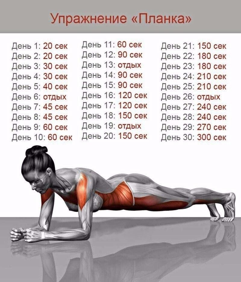 Планка по дням для похудения