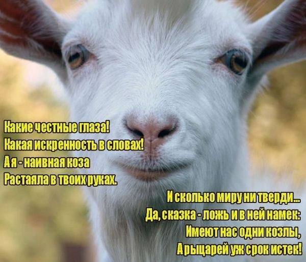 Смешные картинки про мужа козла