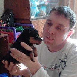 Сергей, 42 года, Ярославская