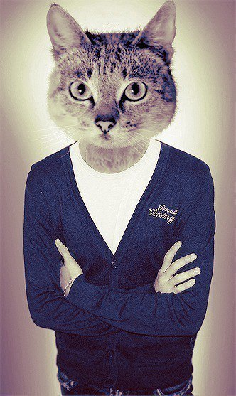 Картинка кот в найке