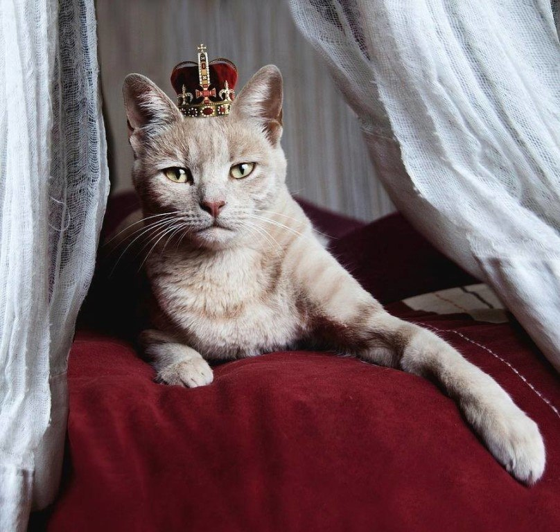 Кот в короне картинка
