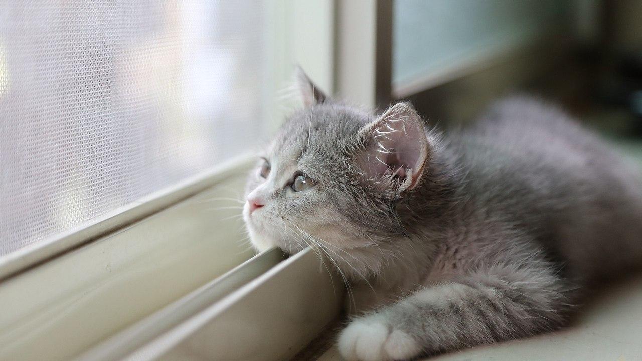 очень картинки я жду тебя кошки него