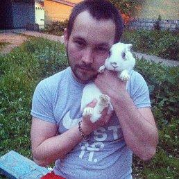 Максим, 29 лет, Пушкино