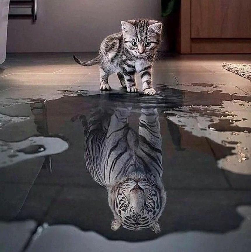 Картинки каждый кот в душе тигр