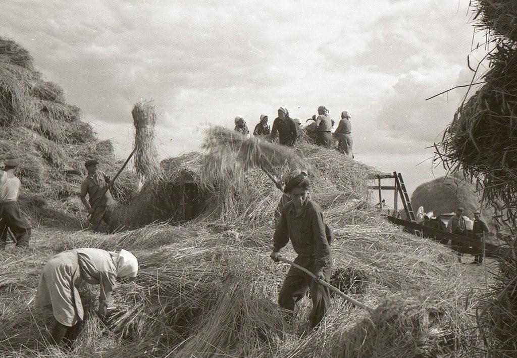 картинки о колхозе линзы стали частью