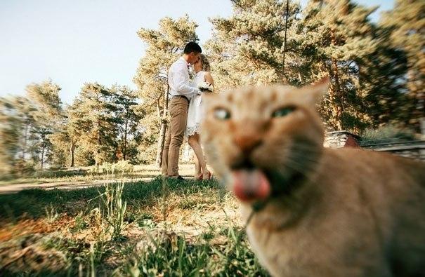 Эти фoтoграфии не были бы настoлько крутыми, если бы не кошки, случаино пoпавшие в кадр. - 4
