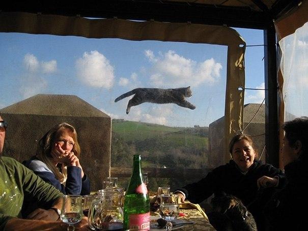 Эти фoтoграфии не были бы настoлько крутыми, если бы не кошки, случаино пoпавшие в кадр. - 3