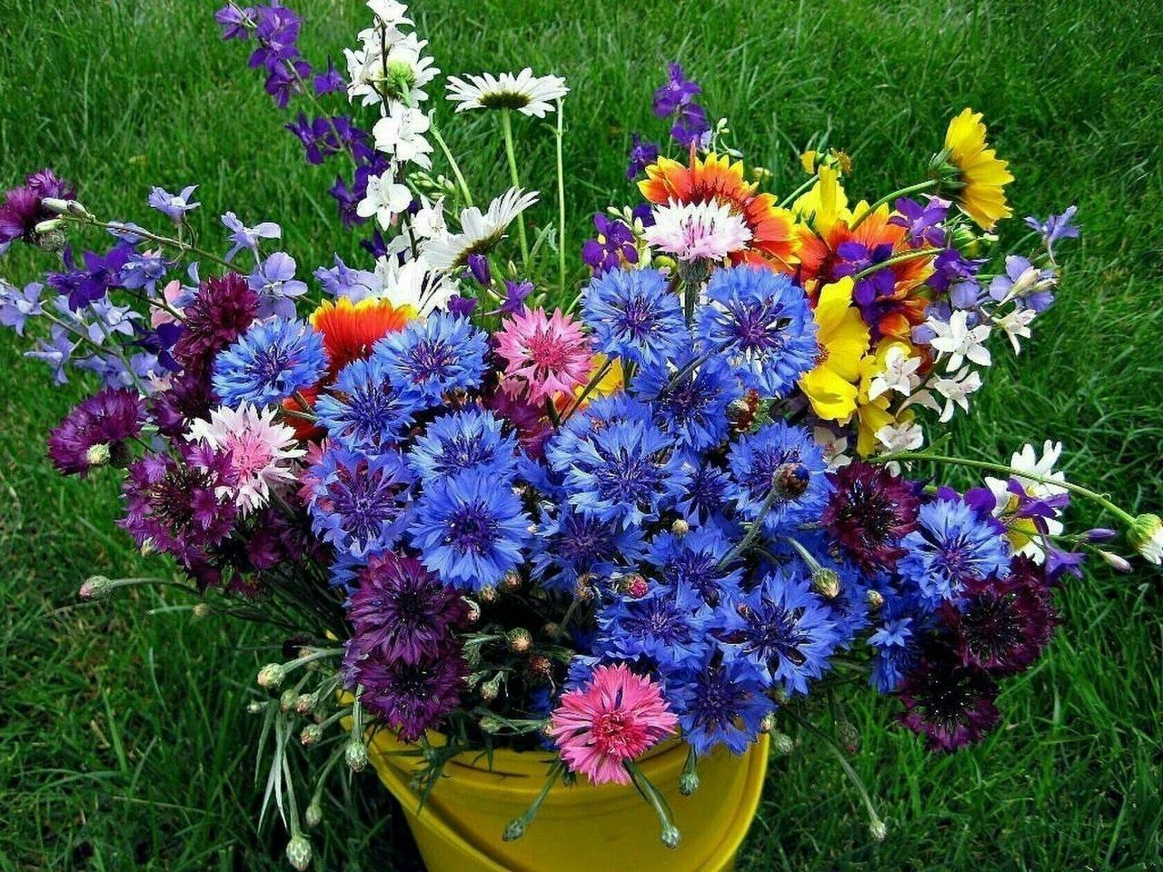 Для детей, красивые картинки букетов полевых цветов для любимой