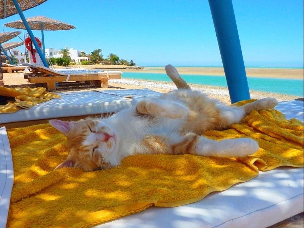 Сделать открытку, смешные картинки об отпуске на море