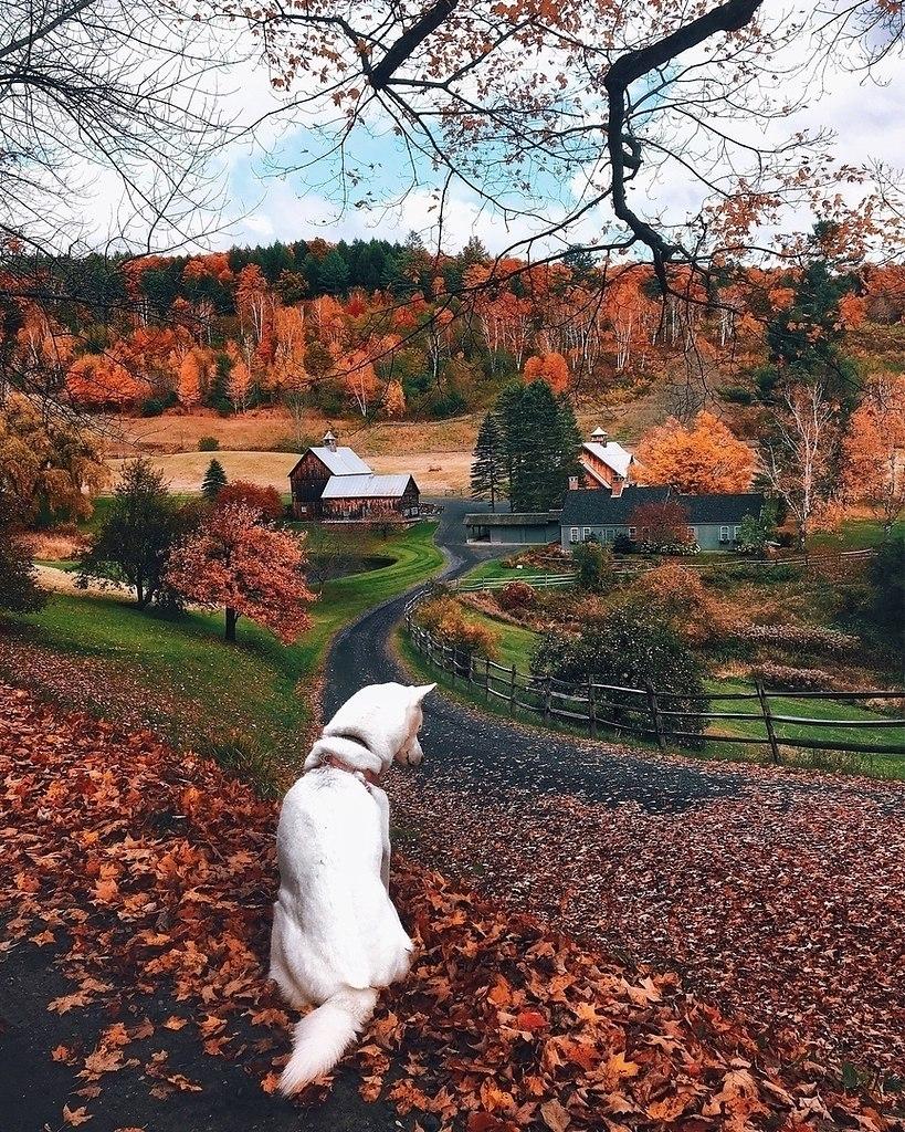 Картинки с приколом осенью