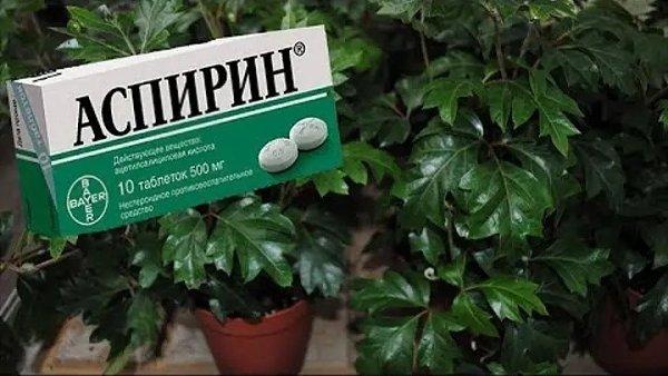 Аспирин,который не только от головных болей.Аспирин — препарат, используемый для лечения боли, ...