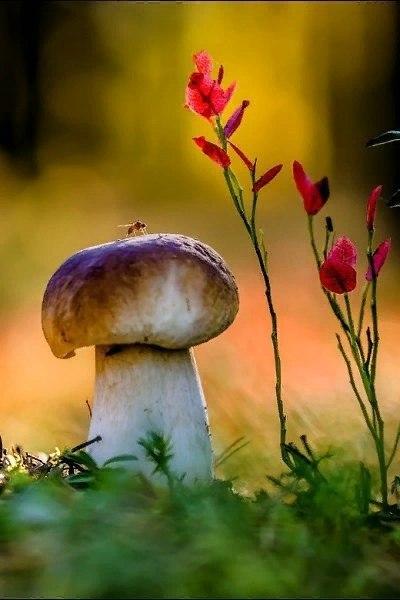 Не спеша иду по лесу - благодать! Ведь душе грибы полезно собирать. Ни машин здесь, ни асфальта, ни ... - 3