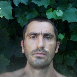 Владимир Владимирович, Лес - фото 4